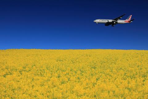 菜の花と飛行機合成.jpg